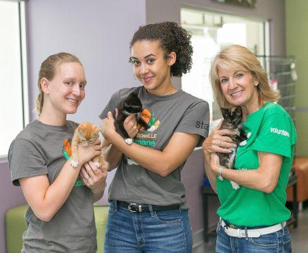 Jacksonville-Humane-Kittens-AmericanPetsAlive