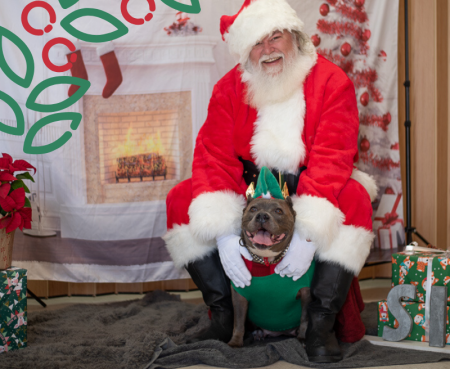 Santa with shelter dog