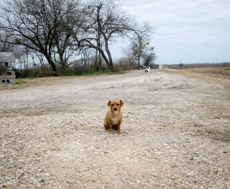 The Future of Helping Lost Dogs 3