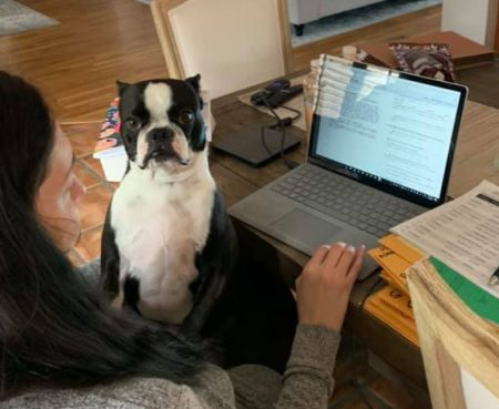 Working remotely dog