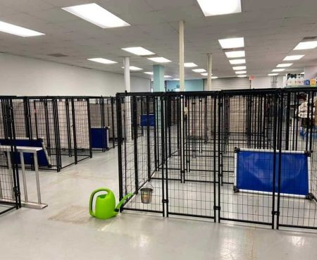 Shelters have emptied their kennels