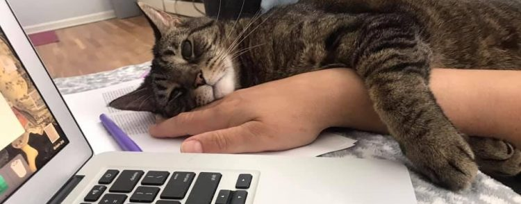 Cat-working-remotely-American-Pets-Alive