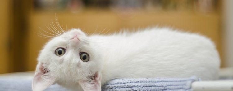Kitten 1285341 1920