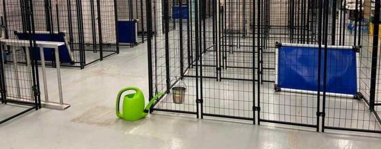 Shelters have emptied their kennels 200331 210905