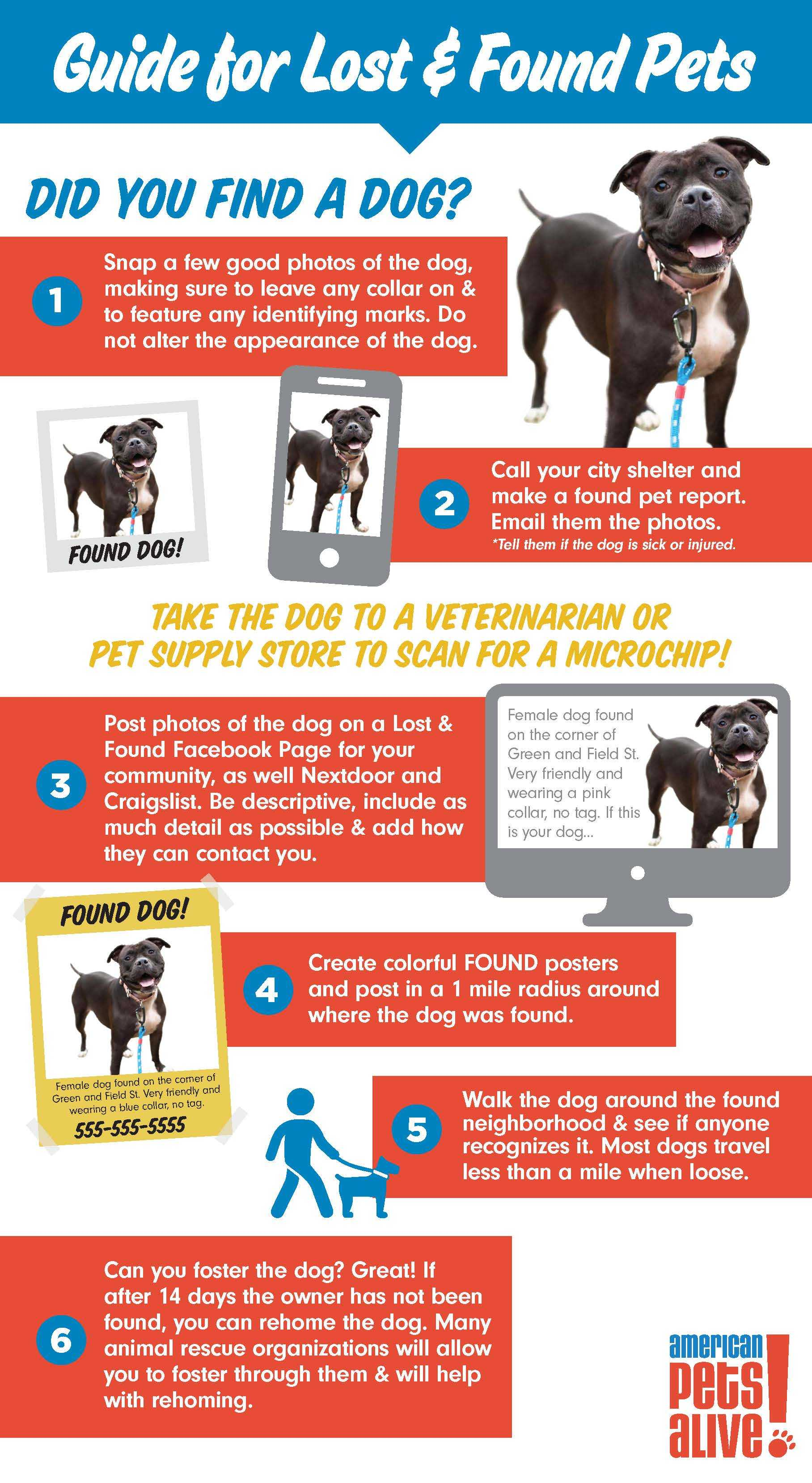 Guide for Lost and Found Dogs