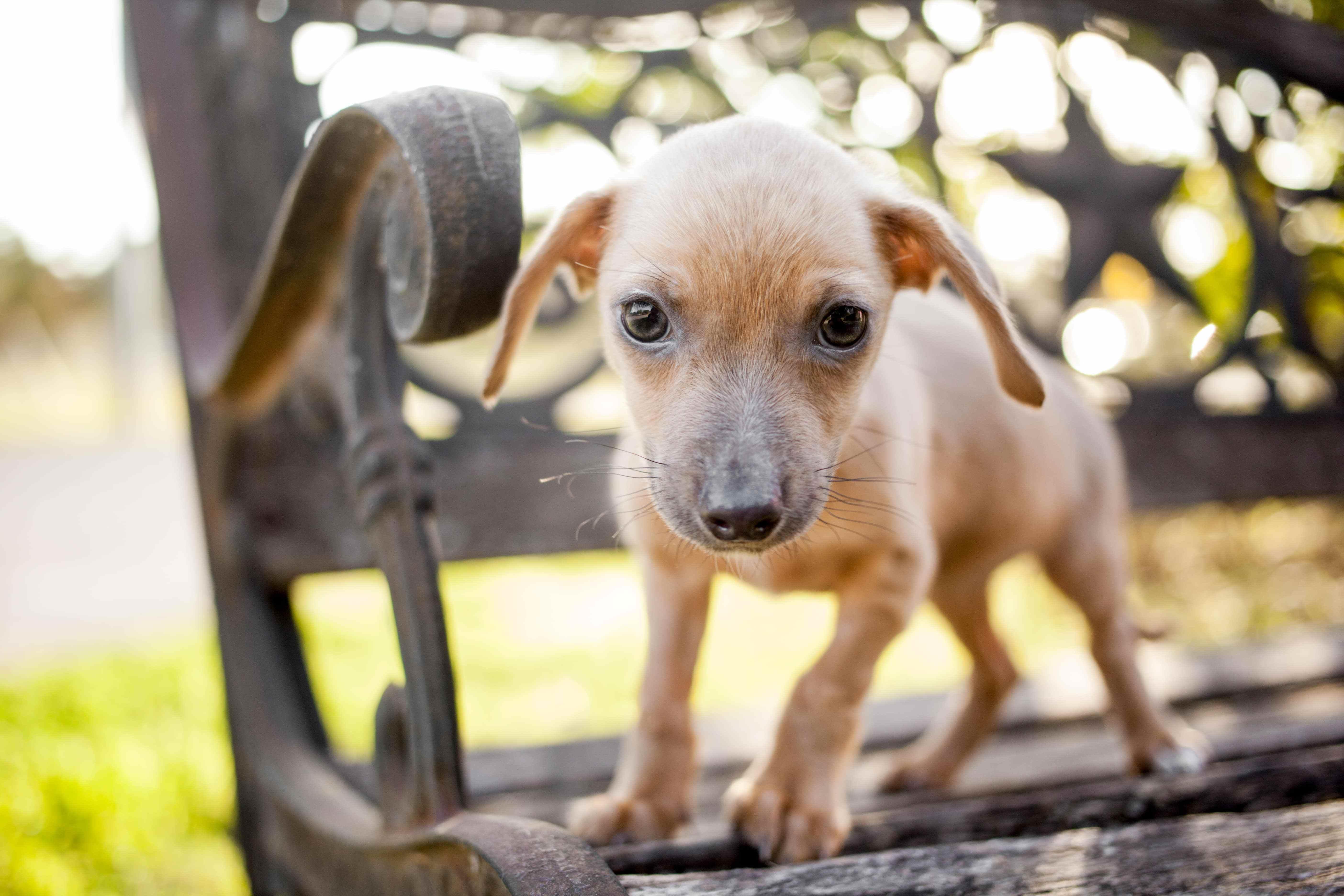 American Pets Alive Making America No Kill American Pets Alive